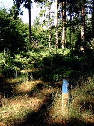 de bossen van het Drentsewold